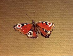 Enlarge: Peacock Butterfly - insect painting in gouache (Inachis io)