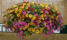 Plants For A Sunny Balcony On Pinterest Balcony Plants