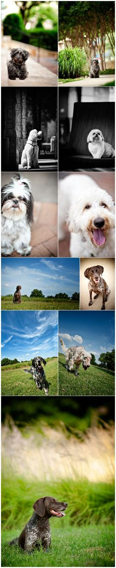 Unleashed Pet Photography