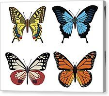 Here I collect some pictures for some butterfly species butterfly species. Butterfly House, Monarch Butterfly, Butterfly Wings, Butterfly Project, Butterfly Quilt, Butterfly Template, Free Vector Graphics, Free Vector Art, Free Vector Images