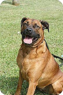 Harrisburg, PA Labrador Retriever Mix. Meet Jolie, a dog