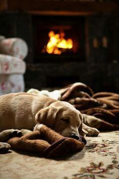 Dog & fireplace
