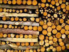 stacking wood, a family affair