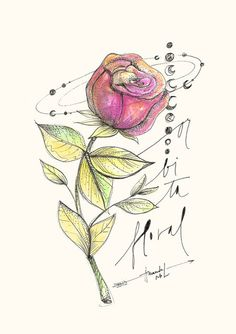 http://loja.amandamol.com.br/pd-216929-rosa-orbita-floral.html?ct=d1e23