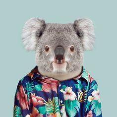 Zoo Portrait : Koala