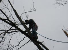 Tree Removal Service NJ