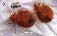 Pest Control Services, Animals, News, Shape, Home Remedies, Health, Animales, Animaux, Animal