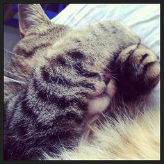 my cat by bibidelang, via Flickr