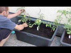 Tomatenkübel aus Mörtelkasten selber bauen – Eine reiche Ernte auf kleinem Platz