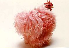 Pink Frizzle Hen Chicken that's a rooster. all hens are chickens, not all chickens are hens. The color is extremely undignified to put on a rooster, and it's probably koolaid. Fancy Chickens, Chickens And Roosters, Chickens Backyard, Pretty Birds, Beautiful Birds, Animals Beautiful, Beautiful Swan, Farm Animals, Animals And Pets