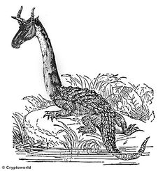 Ninki nanka- African folklore: a swamp creature described as being a reptilian dragon. It supposedly took people from the side of the water who got to close