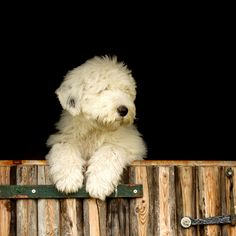 A dog wags its tail with its heart * explore * by dewollewei, via Flickr