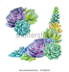 Watercolor Succulents Stock Photos, Images, & Pictures | Shutterstock