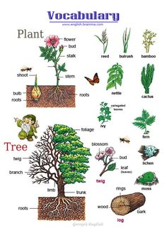 English vocabulary: Plants and Trees … English Fun, English Tips, Learn English Words, English Writing, English Study, English Lessons, English Grammar, English Language Learning, Teaching English