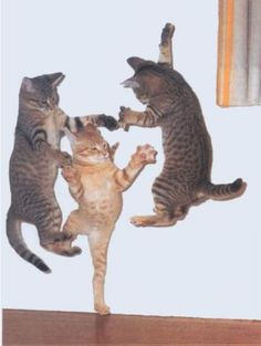 Dancing Kitties -This literally made me laugh out loud while all alone at my computer....  awesome!