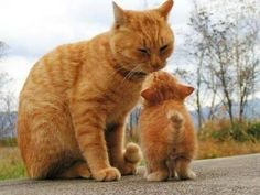 Cats and kittens tabby kitty 16 ideas Cute Cats And Kittens, I Love Cats, Crazy Cats, Cool Cats, Kittens Cutest, Pretty Cats, Beautiful Cats, Bb Chat, Baby Animals
