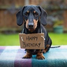 A happy birthday wish from this cute Dachshund would make any birthday special. Free Happy Birthday Cards, Happy Birthday Pictures, Happy Birthday Quotes, Happy Birthday Greetings, Birthday Fun, Birthday Ideas, Dachshund Puppies, Weenie Dogs, Dachshund Love