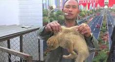 http://outcryearth.wordpress.com/2014/04/11/investigators-infiltrate-the-dog-and-cat-meat-mafia-in-china-by-animal-equity/
