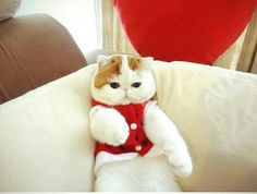Snoopy Snoopy Cat, Christmas Cats, Teddy Bear, Photoshoot, Dogs, Cute, Animals, Iphone Camera, Nikon
