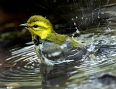 Birds using dog's dish for bath may spread disease