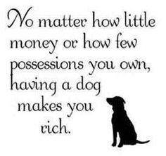 Just A Dog? To me my dog isn't a dog he is my furry little