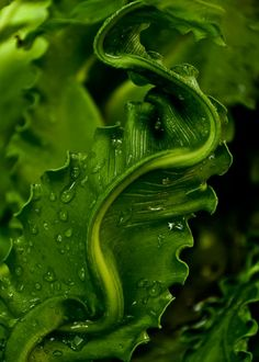 Green | Grün | Verde | Grøn | Groen | 緑 | Emerald | Brunswick | Moss | Colour | Texture | Style | Form | Close-up of bright emerald green leaves