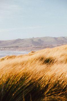 Bodega Bay - Photo by Micah Harvey