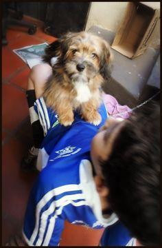 Bela amizade #proteja #cão #amizade