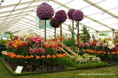 The beautiful stand from H. W. Hyde and Son in the Floral Marquee at the RHS Hampton Court Palace Flower Show.   H. W. Hyde and Son are specialist growers of Lilies, Alliums and other bulbs.