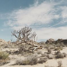 Thinking about Joshua Tree National Park today. Maybe we should head there this weekend for a mini vaca! Where do you think we should go?