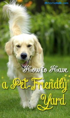 How to Have a {Pet-Friendly} Yard!