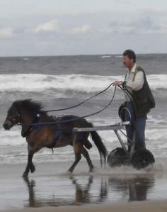"""Simon Mulholland and the Saddlechariot. Read more: http://horsetalk.co.nz/2014/01/13/wheelchairs-barrier-horse-fun/#ixzz2tXeoXVJ7  Reuse: You may use up to 20 words and link back to this page. Other reuse not permitted  Follow us: @Horsetalk.co.nz on Twitter 