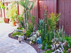 Lovely Cacti And Succulent Garden (desert Landscape Backyard Small Yards)