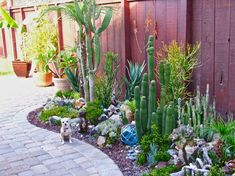 Lovely cacti and succulent garden
