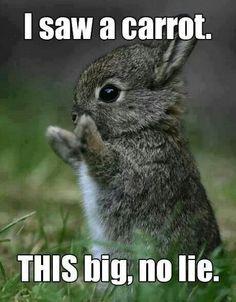 #Bunnylovie