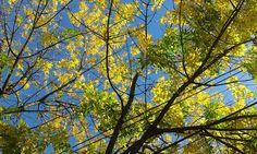 Mi Universar: De a poco se va el otoño