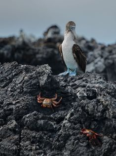 The bird and the crabs by Daniel Eskenazi