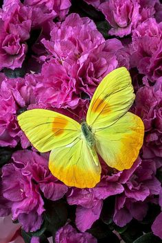 Yellow butterfly in purple flowers