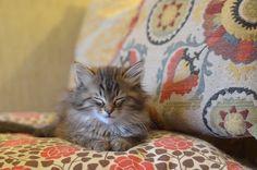 {cozy soft kitten} I bet she's purring :)