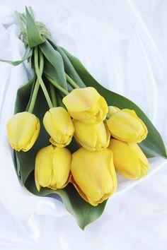 84 Mejores Imagenes De Tulipanes Amarillos Beautiful Flowers