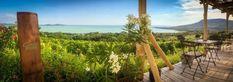15+1 borterasz, mely minden Balaton-rajongó szívét megdobogtatja Vineyard, Outdoor, Outdoors, Vine Yard, Vineyard Vines, Outdoor Games, The Great Outdoors