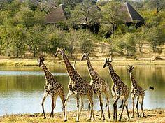 Safari in South Africa-