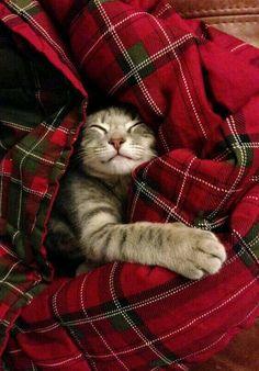 een kleine Schot.