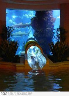 A water slide through an aquarium with sharks!