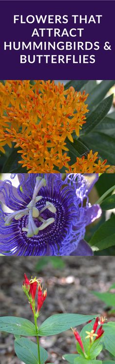 Flowers That Attract Hummingbirds & Butterflies. These Mississippi native plants are beautiful and provide food for bees, butterflies, birds via @tarawildlife