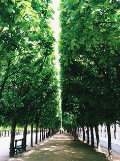 Green overdose at Jardin du Palais Royal in Paris / photo by Beyza M