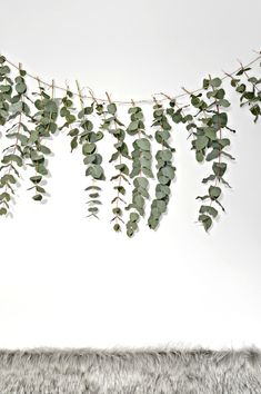 A quick (and easy) DIY eucalyptus garland - DIY home decor - Your DIY Family Here is a quick and easy diy eucalyptus garland to make this Christmas. This eucalyptus garland makes a really pretty backdrop to a dining table. Minimal Christmas, Christmas Diy, Christmas Decorations, Homemade Christmas, Christmas Garlands, Easy Diy Birthday Party Decorations, 50th Anniversary Decorations, Natural Christmas, Christmas Flowers