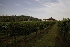 #winery #vineyards