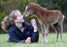 Newborn: Miniature horse Sorrel, aged just two days, explores the outdoors for the first time in Dartmoor, Devon