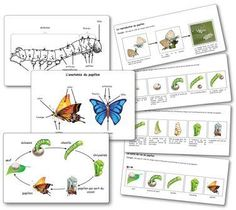 Elevage de papillons en maternelle : la séquence Butterfly farming in kindergarten: the sequence Papillon Butterfly, Montessori Science, Alternative Education, French Classroom, Montessori Materials, Raw Gemstones, Eric Carle, Girl Blog, Life Cycles